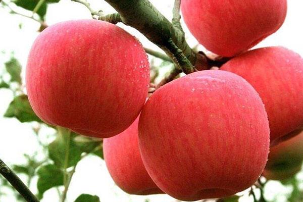 苹果 (3).jpg