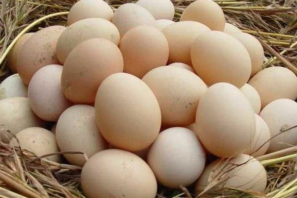 鸡蛋1.jpg