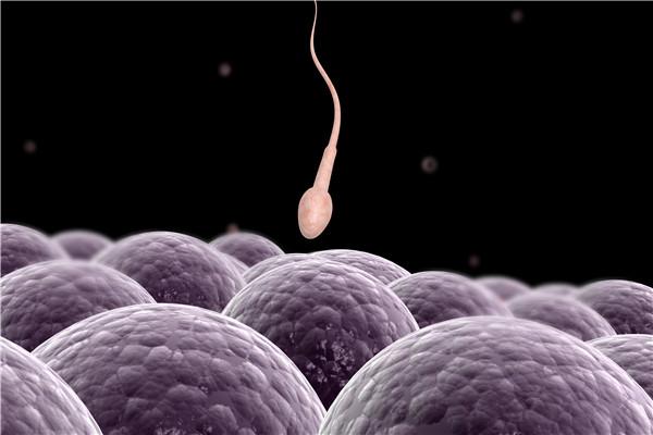 少精弱精怎么办?少精弱精能怀孕吗?